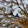 Red Colobus family group