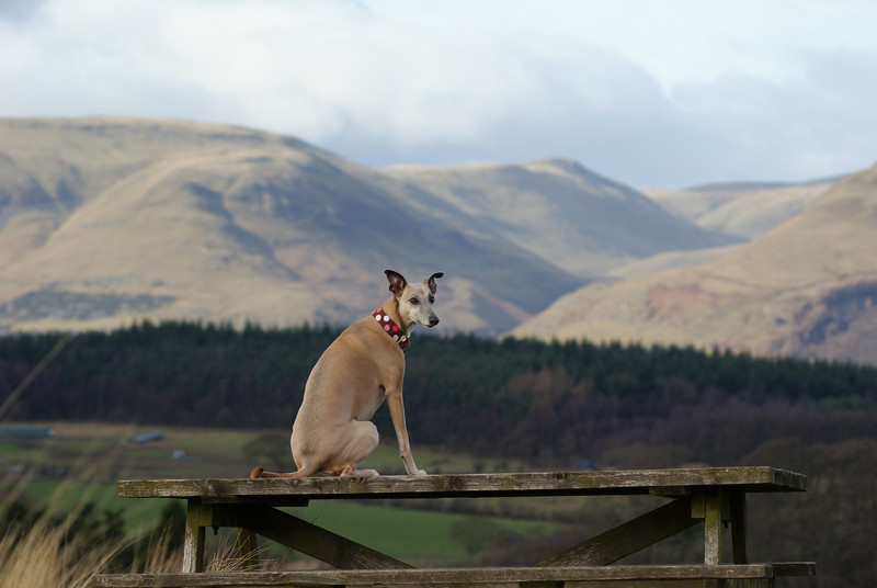 Penny with Ochils in the background, slightly more zoomed out