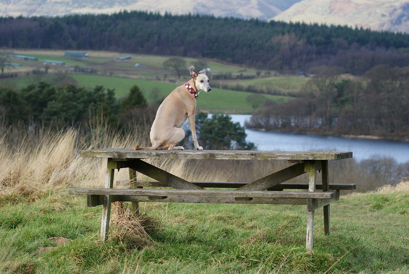 Penny on bench