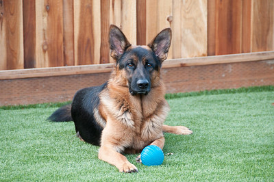 Monty and his ball.