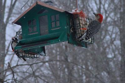 Ghent Birds 16