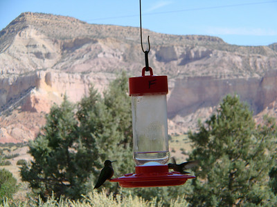 Hummingbirds at Piedra Lumbre Visitor Center, Ghost Ranch   http://www.ghostranch.org/museums--activities/piedra-lumbre-education--visitor-center.html