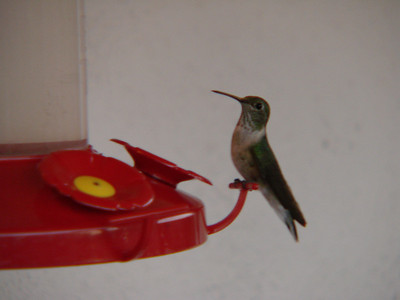 Hummingbirds at Casa del Sol, Ghost Ranch   http://www.ghostranch.org/courses--retreats/2009-casa-del-sol-events.html
