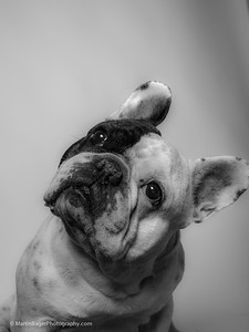 Gimli. Photo Martin Bager