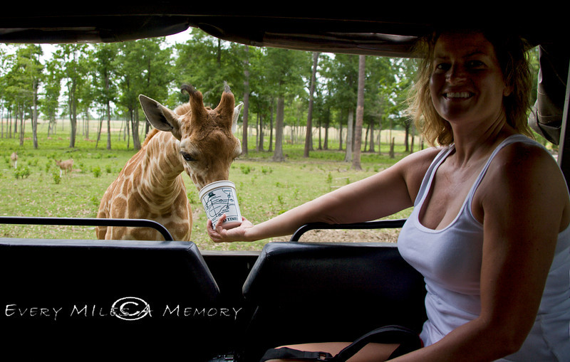 Cindy Feeding the Baby Giraffe in the GLobal Wildlife Center, Louisiana