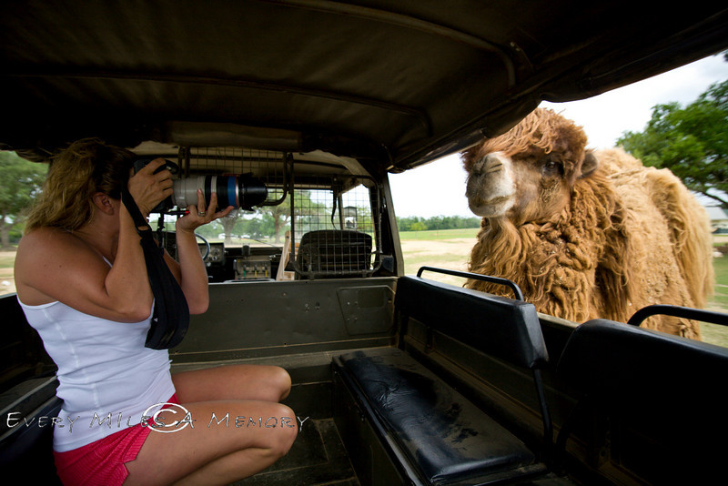 Getting upclose and personal with a Gobi Camel - Global Wildlife Center, Louisiana