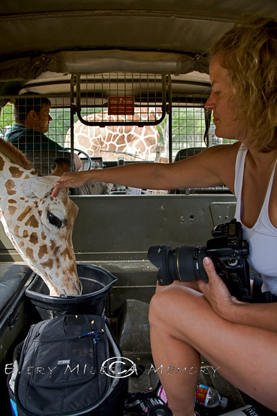 Petting one of the Giraffe's who came into the Pinzgauer - Global Wildlife Center, Louisiana