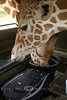 I wondered how our ThinkTank Camera Bag got filled with Corn - Global Wildlife Center, Louisiana - Photo by Cindy Bonish