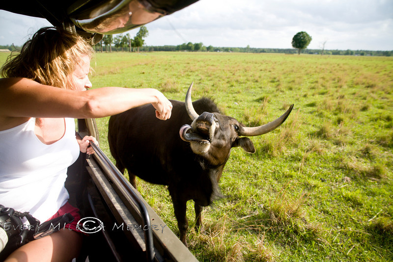 Cindy with a Long Tongued Bull at the Global Wildlife Center in Louisiana