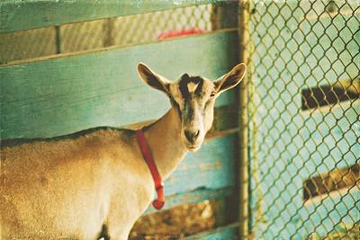 Prince William County Fair 2011 // Manassas, Virginia