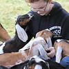 Opening of Indian Valley Goats Dairy at Krochmal Farms in Tewksbury. Kayleigh Nagle, 12, of Tewksbury, with some of their Nubian goat calves. The breed is very friendly. (SUN/Julia Malakie)