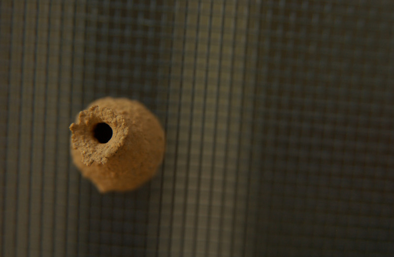 """Tiny (3/4"""") """"pot"""" made by wasp on a screen door!"""