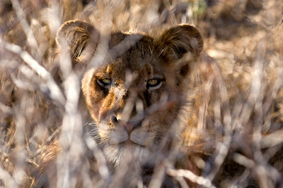 Female peering out of the bush