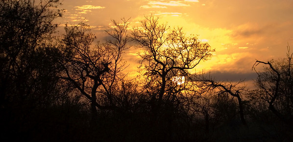 Sunrise over the African bush