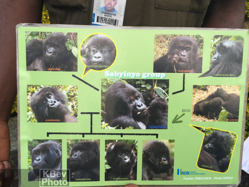 Day 8 - This is the family we saw at the park.  It had the oldest Silverback and several other interesting gorillas.