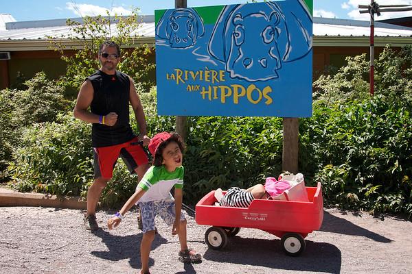 Hippos!!