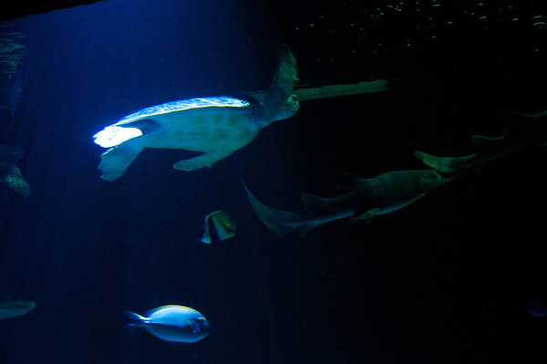 Sea turtles and sharks.  I had no idea the Grandby zoo had such a great aquarium exhibit.