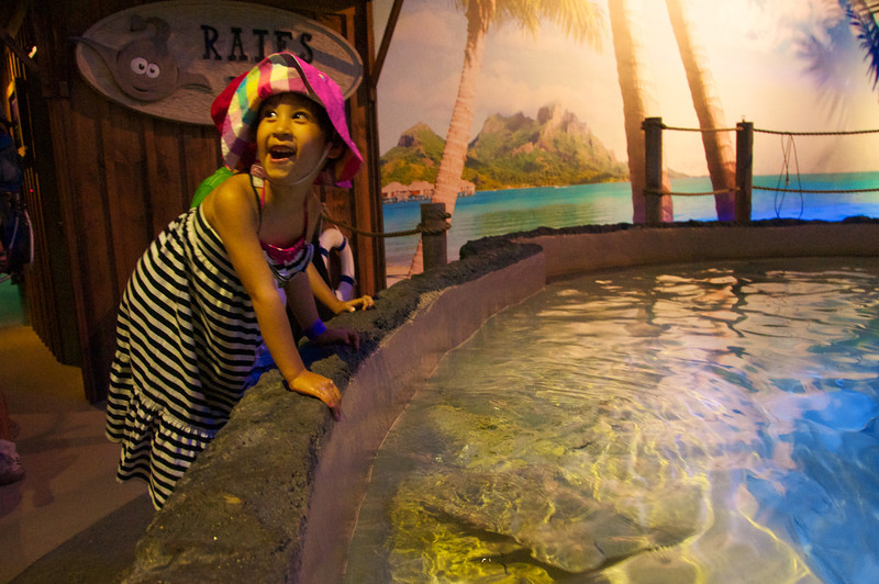 Rays, soft slimey and oh so friendly.  Best petting experience ever!
