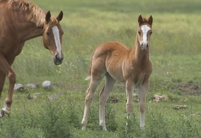 Mother Horse & colt