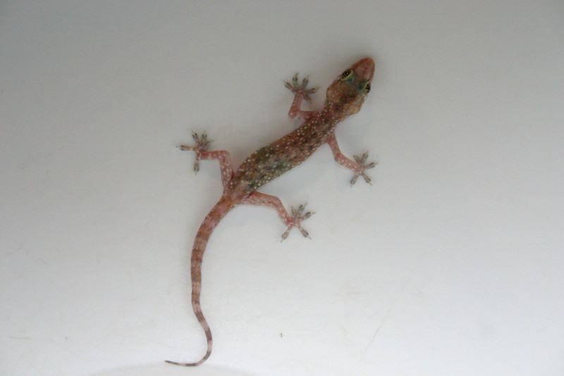 Escaping Gecko From light to darkness
