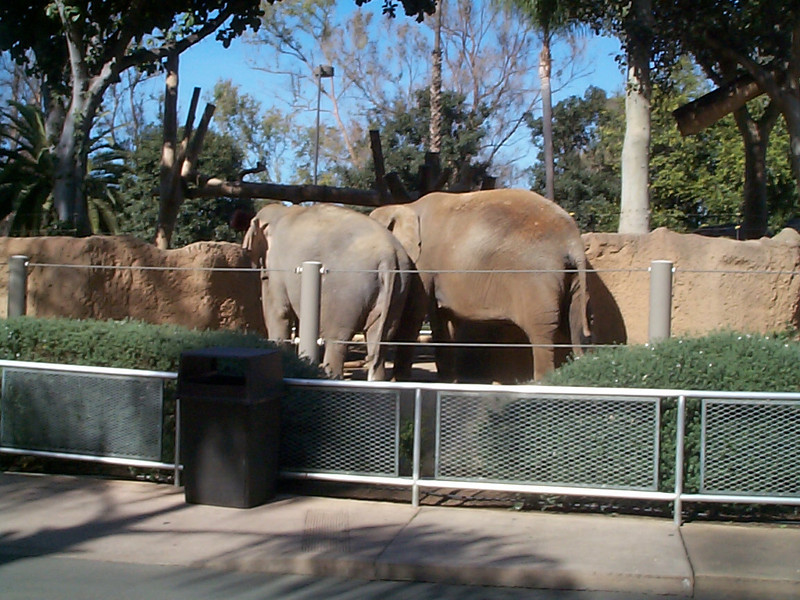Elephant Butts Some days, I\'m told, some people capture marvelous pictures of elephants cavorting in the sunlight. Me, I\'m not so lucky... or patient