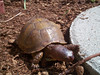 Hey, It\'s Franklin One of our pet turtles is named Franklin. Yes, like the popular kids books. He eats worms, primarily