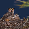 """Owl Family Portrait"""