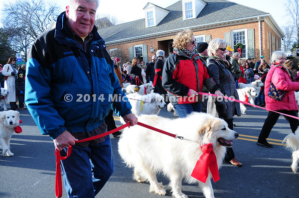 Parade of Pyrenees Dogs MIN_1762