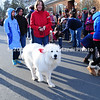 Pyrenees Dog in Parade MIN_1789