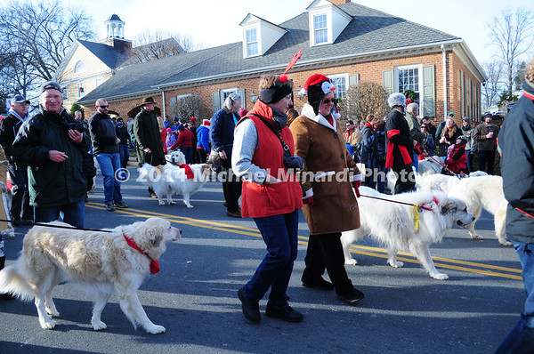 Parade of Pyrenees Dogs MIN_1764