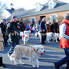 Pyrenees Dogs in Parade MIN_1766