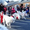 Many Pyrenees Dogs in the Parade MIN_1756