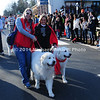 Christmas Parade 2011 : The annual Christmas Parade in Middleburg, VA featured 80 Great Pyrenees Breed Dogs as well as several other breeds.
