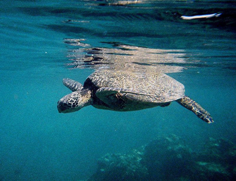 These are from Ke'e'  beach on  Kauai, the farthest northwest island.