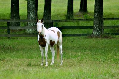 Grey Rock Horses