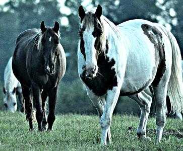 Horse Hi-Lites