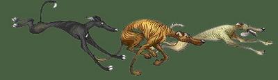 Greyhound Walking Green