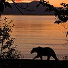 MGB-6188:Sunrise at Naknek Lake