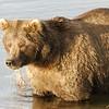 MGB-6529: Bear stare