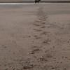 MGB-13-447-79: Follow the track to fishing Brown Bear