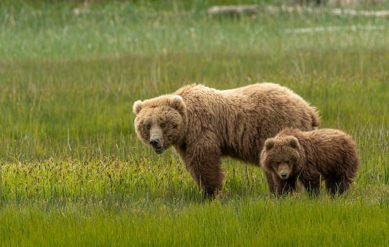 Sow and cub