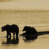 MGB-6544: Brown Bears at sunrise