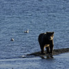 MGB-6156: On the shores of Naknek Lake
