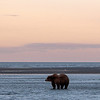 MGB-13-447-73: Fishing Brown Bear at twilight