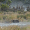 MGB-6127: Misty morning on the Brooks River