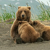 Suckling cubs