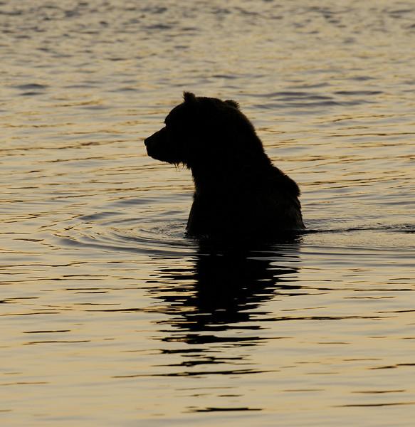 MGB-6538: Fishing Brown Bear silhouette