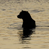 MGB-6538: Fishing Brown Bear silhouette