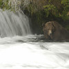 MGB-6690: Brown Bear at Brooks Falls