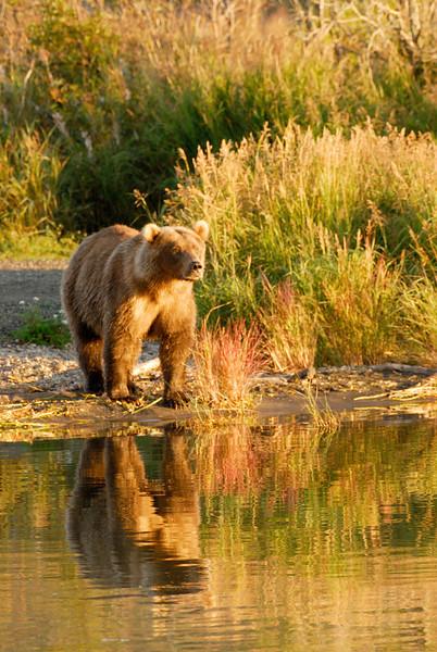 MGB-6550: Brooks river reflection
